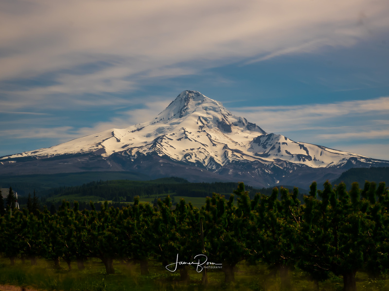 Mt. Hood from Parkland Oregon