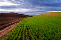 Palouse Expedition